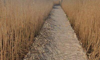 Lawrence Western Moor Loop