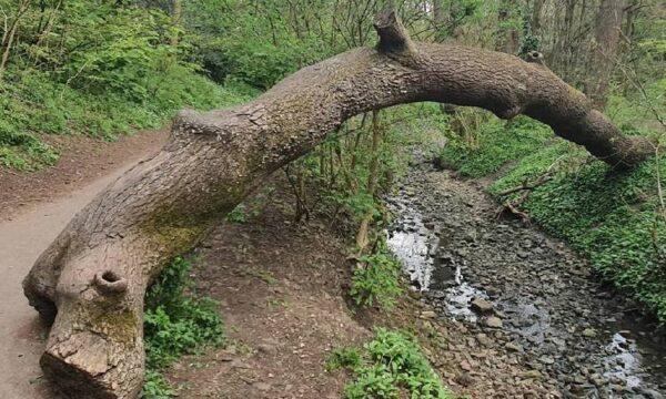 Baddock Wood - Short Loop